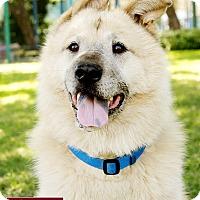 Adopt A Pet :: Vergil - Marina del Rey, CA