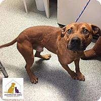 Adopt A Pet :: Rex - Eighty Four, PA