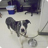 Adopt A Pet :: Polly - Gulfport, MS