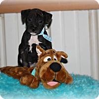 Adopt A Pet :: Lionel - Brattleboro, VT