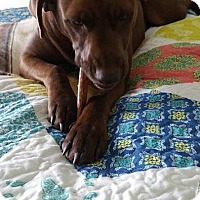 Adopt A Pet :: Katie - Brattleboro, VT