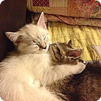 Adopt A Pet :: Marie - Beverly Hills, CA