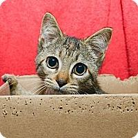 Adopt A Pet :: Patty - New York, NY
