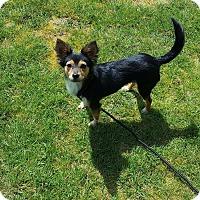 Adopt A Pet :: Rosey - Surrey, BC