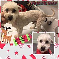 Adopt A Pet :: Patrick Star - Reno, NV