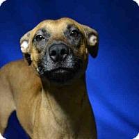 Adopt A Pet :: JAMMY - Ocala, FL