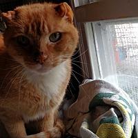 Adopt A Pet :: Kitty Kat - Benton, PA