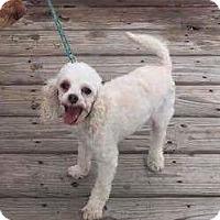 Adopt A Pet :: COOPER - Odessa, FL