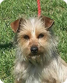 Terrier (Unknown Type, Small) Mix Dog for adoption in Spring Valley, New York - Ginger