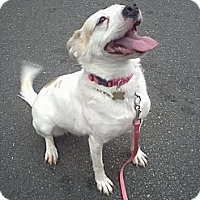 Adopt A Pet :: Spirit - Rockaway, NJ