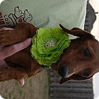 Adopt A Pet :: Jan - Baton Rouge, LA