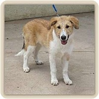 Adopt A Pet :: Colleen - San Diego, CA