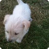 Adopt A Pet :: Courage - Justin, TX