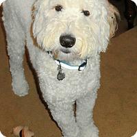 Adopt A Pet :: Jackson NJ - Dexter - New Jersey, NJ