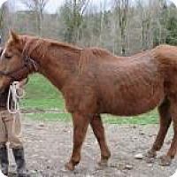 Adopt A Pet :: Big Red - Quilcene, WA