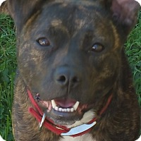 Adopt A Pet :: Chica - Eastpointe, MI