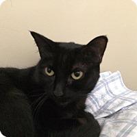 Adopt A Pet :: Egypt - Arlington/Ft Worth, TX