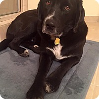 Adopt A Pet :: Belle - Homestead, FL