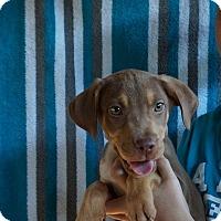 Adopt A Pet :: Cajun - Oviedo, FL