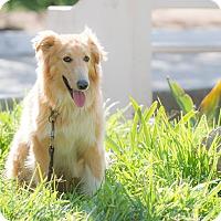 Border Collie Mix Dog for adoption in San Diego, California - Bruno