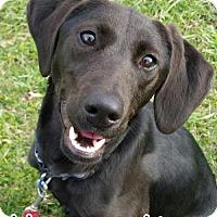 Adopt A Pet :: Margarita - Tremont, IL
