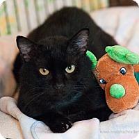 Adopt A Pet :: Galloway - Faribault, MN