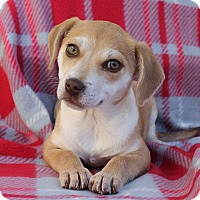 Adopt A Pet :: Philamena - Los Angeles, CA