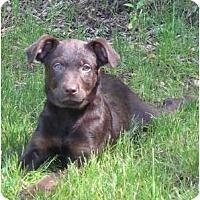 Adopt A Pet :: June - In CT! (video) - Adamsville, TN