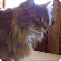 Adopt A Pet :: Heidi - Summerville, SC