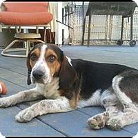 Adopt A Pet :: Creek - Jacksboro, TN