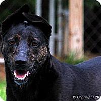Adopt A Pet :: Kelcey - Elizabeth City, NC