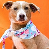 Adopt A Pet :: Skippy - Olympia, WA