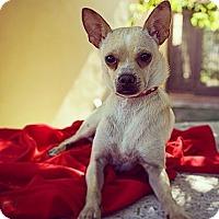 Adopt A Pet :: Donny - Orange, CA