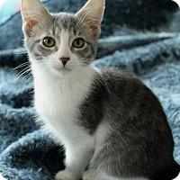 Adopt A Pet :: Miles - Sacramento, CA