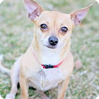 Adopt A Pet :: Secoya - Salt Lake City, UT