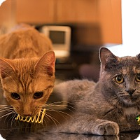 Adopt A Pet :: ToniAnn and Patti - Staten Island, NY