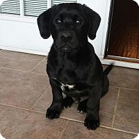 Adopt A Pet :: Jett - Waxhaw, NC