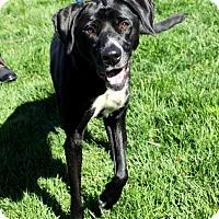 Adopt A Pet :: Journie - Alexandria, VA