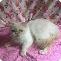 Adopt A Pet :: Mercedes - Hampton, VA