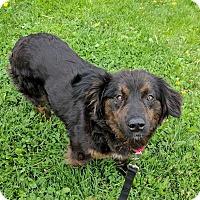 Adopt A Pet :: Petunia - Lisbon, OH