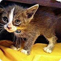 Adopt A Pet :: Roman - Cherry Hill, NJ