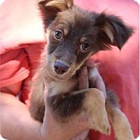 Adopt A Pet :: Curly - Baton Rouge, LA