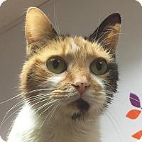 Adopt A Pet :: Molly - Norwalk, CT