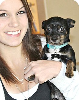 Chihuahua Dog for adoption in Bellflower, California - Tyco 4 1/2 lbs