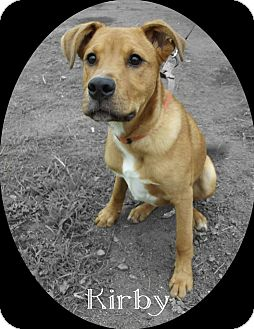 Shepherd (Unknown Type) Mix Puppy for adoption in Hancock, Michigan - Kirby!