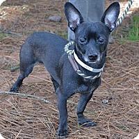 Adopt A Pet :: Ty - Athens, GA