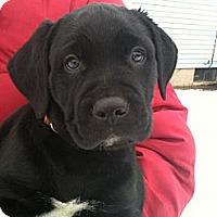 Adopt A Pet :: Axle - Hadley, MI