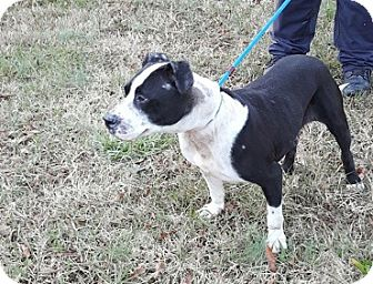 Terrier (Unknown Type, Medium) Mix Dog for adoption in Charlotte, North Carolina - BAILEY