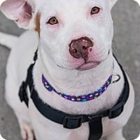 Adopt A Pet :: Matilda - Knoxville, TN