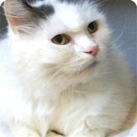 Adopt A Pet :: Belle - Waupaca, WI